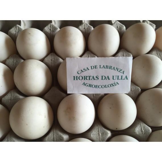 Ovos de parrula